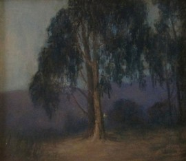 Eucalyptus in the Evening